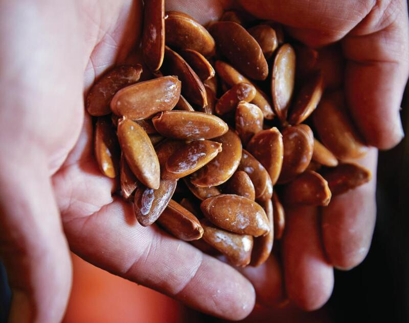 Persimmon seeds in hand