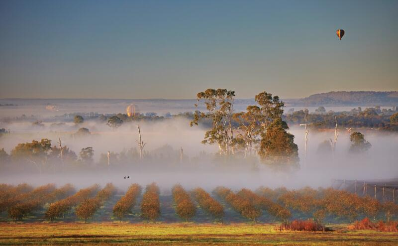 Mist over persimmon orchard